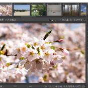 Moet ik Adobe Lightroom kopen of zijn er alternatieven? © artikel, foto, lightroom