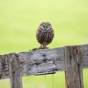 Wild fotograferen in Nederland - uilen © IDG NL