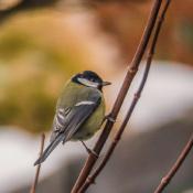 Fotodokter: telelens veroorzaakt ruis bij natuurfotografie © fotodokter, iso, ruis, vogel, tele