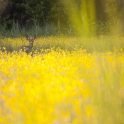 Tips: Natuur fotograferen in mei © natuurfotografie, blog, maand, seizoen, mei