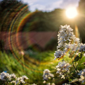 Welke lensfouten bestaan er allemaal? © lensfout, lensflare, zomer