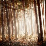 Photoshop: Gefilterde zonnestralen © licht na, quickstart, cursus, photoshop