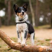 Het juiste licht bij hondenfotografie op locatie © hond, schaduw, zonlicht