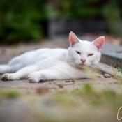 Buiten aan de slag: de kunst van katten fotograferen © IDG NL