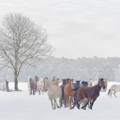 8 tips voor het fotograferen van sneeuwlandschappen © sneeuw, sneeuwlandschappen, winter
