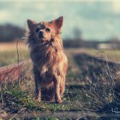 Fotografeer je eigen hond: de basis © Hondenfotografie, hond, huisdier, dieren