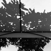 De resultaten van de expertuitdaging: Contrast en schaduwen © schaduw, bladeren, zonlicht