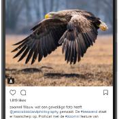 Instagram voor fotografen - Zo krijg je volgers en bouw je een portfolio op © instagram, topfoto, roofvogel