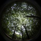 Review: Lensbaby Circular Fisheye objectief © blog, lensbaby, fisheye, apparatuur, review