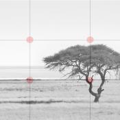 11 tips voor een betere compositie © diagram, compositie, regel van derden