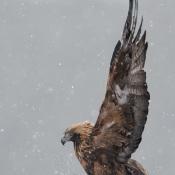 Fotograferen in de M-, A en S-stand voor beginners © sneeuw, grijs, arend