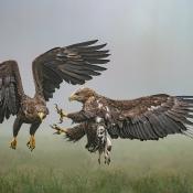 Dit is de winnaar van de Panasonic fotowedstrijd 'Natuurfotografie'! © fotowedstrijd, panasonic, natuur