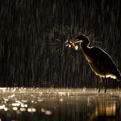 Doe mee met de Fotowedstrijd 'Natuur' en win een Panasonic camera! © zoom, fotowedstrijd, natuur