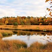 6 van de mooiste herfstlocaties van Nederland om te fotograferen © herfst, bos, veluwe