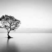 Tips voor de mooiste landschappen in zwart-wit! © zwartwit, rustig, landschap, boom