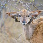 Dit is de winnaar van de Panasonic fotowedstrijd 'natuur'! © winnaar, panasonic, natuur