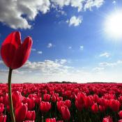 8 tips voor Lentelandschappen  © tips, Natuur, landschap, lente, landschapsfotografie, voorjaar