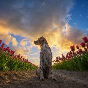 Tips voor hondenfotografie - Maak prachtige portretten © artikel, tips, honden