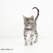 Dit zijn de leukste kattenfoto's op Zoom.nl van 2019 © IDG NL