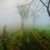Tips voor het fotograferen van mist en dauw © IDG NL