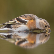 12 tips voor het maken van geweldige vogelfoto's