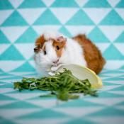 Knaagdieren binnen fotograferen: zo pak je het aan! © IDG NL