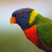 8 tips voor de beste vogelfoto