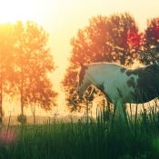 Expertuitdaging: Laat het weer je foto bepalen © paard, zonlicht, zon