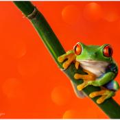 Maak mooiere macrofoto's met deze tips voor macrofotografie   bloemen en insecten © zoom, tips, macro, insecten, macrofotografie, Special, magazine, gids