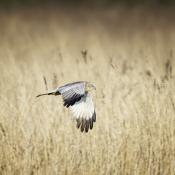 Ga jij met SIGMA mee vogels fotograferen op Texel? © Patrick de Graaf