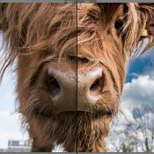 Het verschil tussen RAW en JPEG © artikel, raw, jpeg