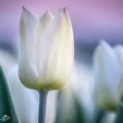 De resultaten van de expertuitdaging: Voorjaarsbloeiers fotograferen © expertuitdaging, voorjaarsbloeiers, bloemen, lente