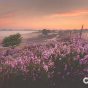 5 mooie gebieden in Nederland voor een dagje fotografie!  © IDG NL