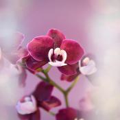 4 leuke attributen voor macrofotografie © IDG NL