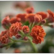 Hoe fotografeer je bloemen? Simpele tips!