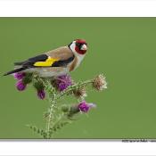 Fotograferen vanuit vogelhutten © putter, blog, vogelhutten