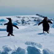 Fotodokter: Fotograferen op Antarctica © winter, kou, Fotodokter, condens, Antarctica