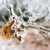 Hoe je je camera beschermt tegen de kou