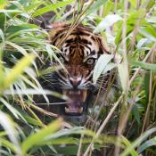 12 tips voor het fotograferen van wilde katachtigen © IDG NL