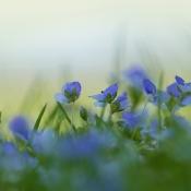 Zoom.nl Maandopdracht Maart 2017 - Breng de lente op een unieke manier in beeld