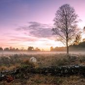 Het NK Natuurfotografie gaat weer van start! © veluwen, mist, bomen
