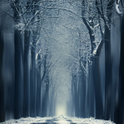 Tips voor het fotograferen van sneeuw © artikel, sneeuw, foto