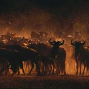 Praktische fotografietips op een safari © Blog, Safari, Wildlife, wildsafari, natuur, landschap