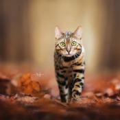 Expertuitdaging: Dierenportretfotografie © kat, bos, bladeren