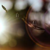 Met tegenlicht fotograferen - vijf tips voor het mooiste resultaat.  © lensflare, tegenlicht, zonlicht