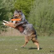 Doe mee met een spectaculaire workshop hondenfotografie en test een Tamron ultra-telezoom objectief! © Tamron, hondenfotografie, Rick Letteboer 2