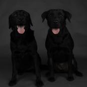 Honden fotograferen in de dierenwinkel © blog, dierenfotografie, Hondenfotografie, dierenwinkel