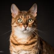 De resultaten van de expertuitdaging: Dierenportretfotografie © expertuitdaging, dieren, portret