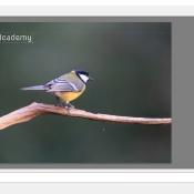 Zo zet je een watermerk in je foto in Lightroom © IDG NL