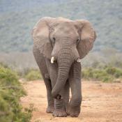 Gebruikersreview: Wildlife met de Sigma 60-600mm in Zuid-Afrika © Carolien Zwerver